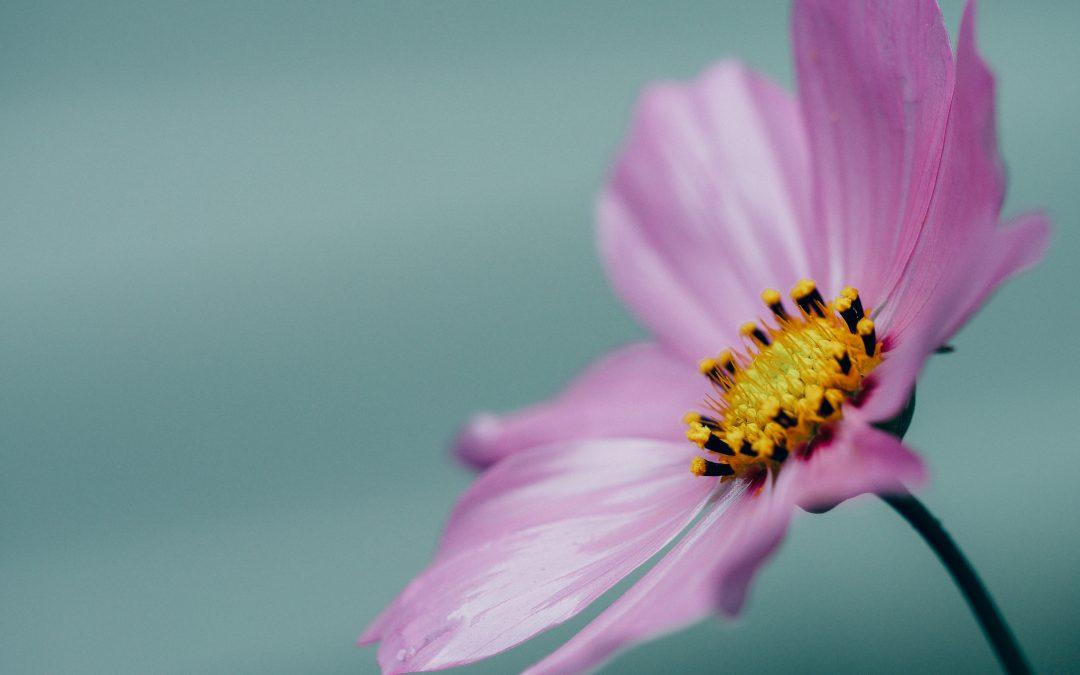 Managing the menopause naturally
